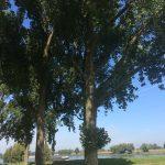 Bomenplan Nieuwpoort aangepast